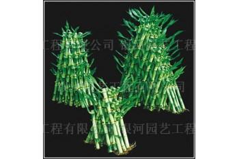 Lucky Bamboo Pyramid