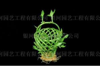 Mushroom Basket
